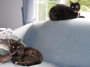 cats_on_sofa