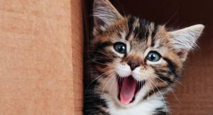 cute_cat_videos