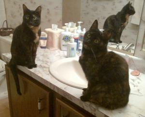 cats_and_sinks
