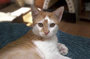 adoptable_cat