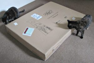 cats_with_box