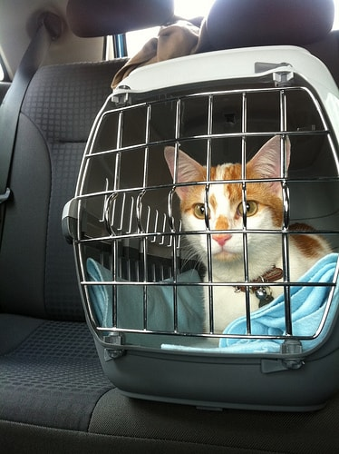 cat_in_car_carrier