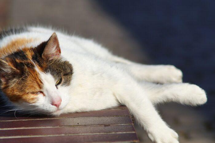 cat-sun-heat-stroke