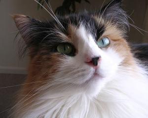 cat_allergies