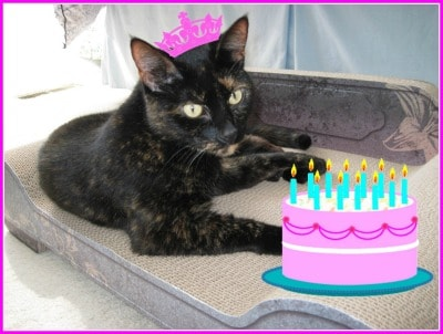 cat_with_birthday_cake