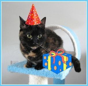 cat_birthday