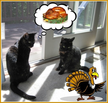 Thanksgiving_cats