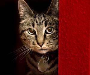 fearful_cat