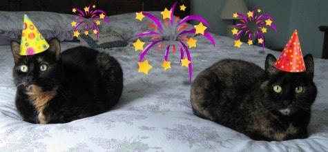Happy_New_Year_cats