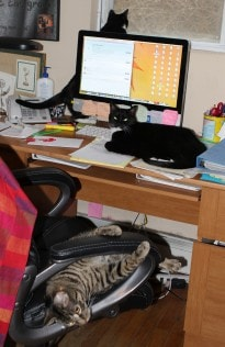 office_cats