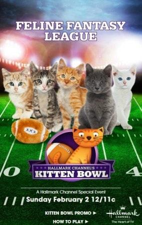 Kitten_Bowl_feline_fantasy_league