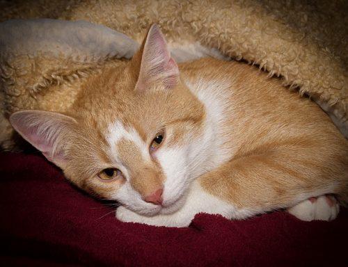 hospice-care-cat