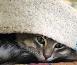 nervous_cat
