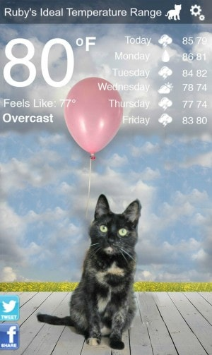 weather_kitty