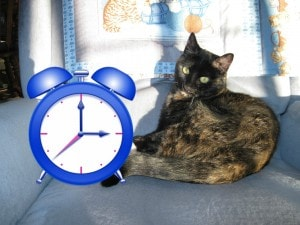 can cats tell time