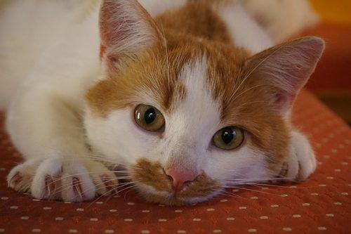 cat-scratch-fever