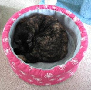 cat_bed_nap