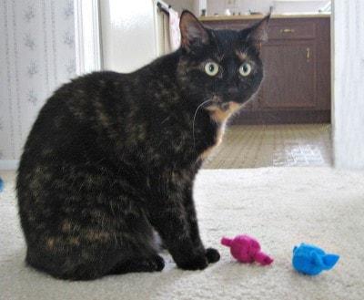cat_toys