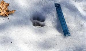 panther_pawprint