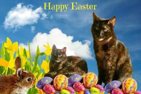 Easter_cats