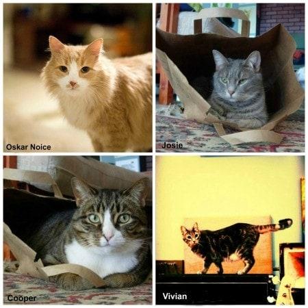 Mike_Bridavsky_cats
