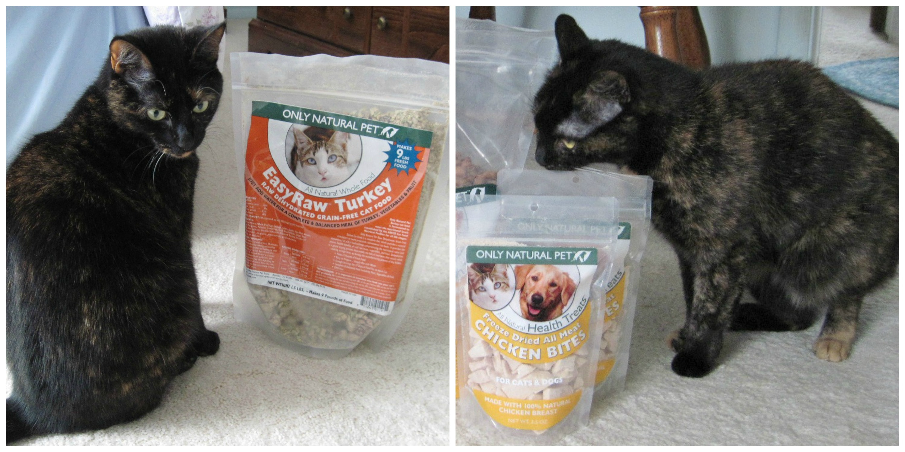 are dehydrated and freeze dried foods a healthy option for your cat