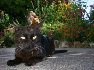 Bob_the_cat