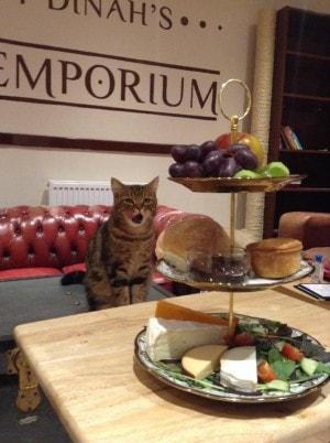 Lady_Dinah's_Cat_Emporium