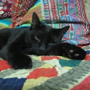 black_cat_on_quilt
