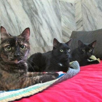 three_cats_on_sofa
