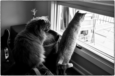 two_cats_window
