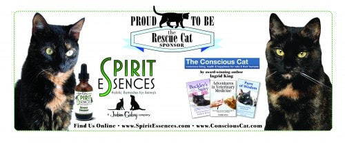 Spirit_Essences_The_Conscious_Cat