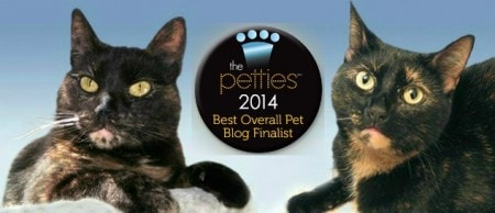 2014_Pettie_finalist