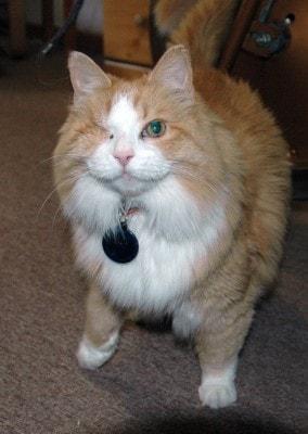 Shasta_Abbey_cats