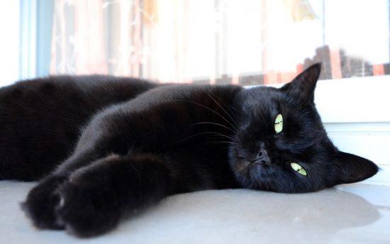 cat-myths