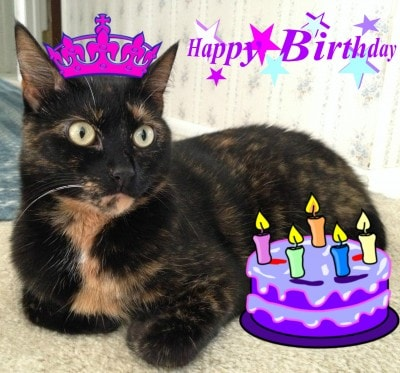 birthday_cat