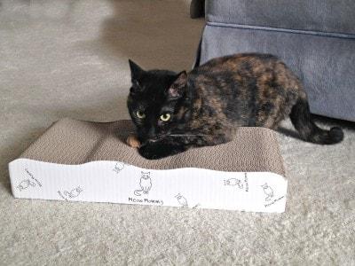 cat_scratcher