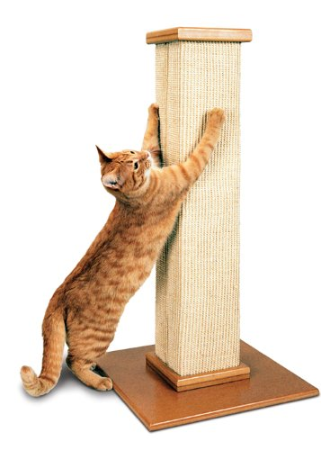 Best Cat Scratching Posts The Conscious Cat
