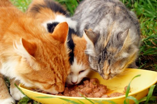 cats_eating