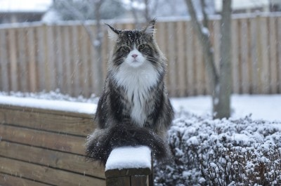 cat_in_snow