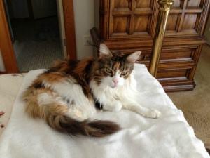 Assisi_Loop_cats_arthritis