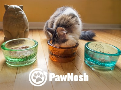 glass_pet_bowl