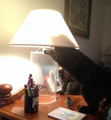 cat_with_lampshade