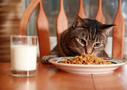 How Much Raw Food Should I Feed My Cat