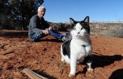 cat-hiking