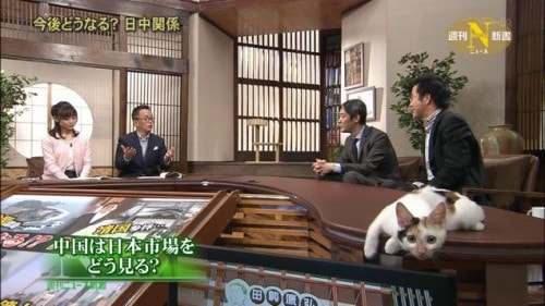 cat_Japanese_news
