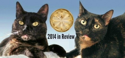 2014 year end review