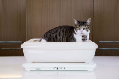 Tailio-Smart-Health-Monitor-for-Cats