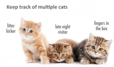 Tailio-multiple-cats-OK