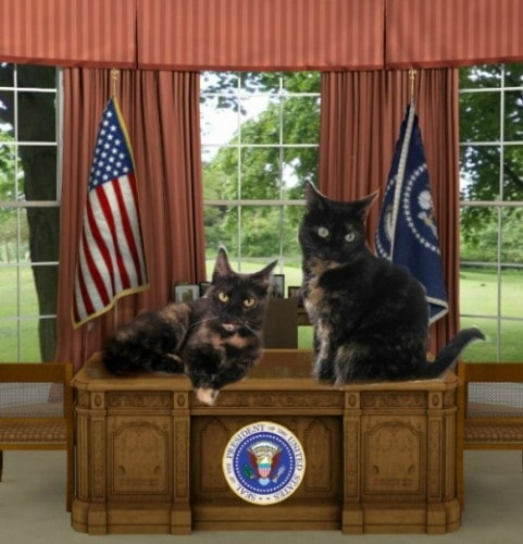 cats-white-house